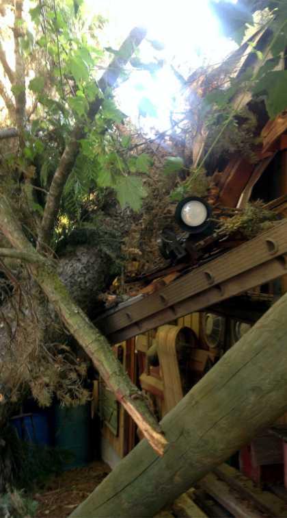 Tree damage to building