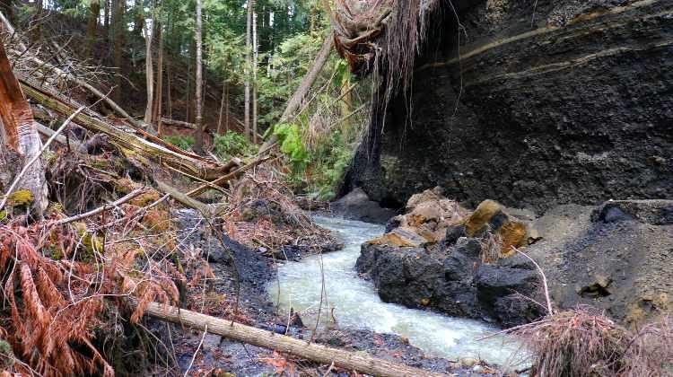 Newsome Creek Eroding